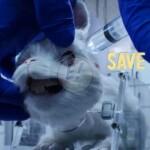 Save Ralph un cortometraje para concientizar sobre la explotación animal